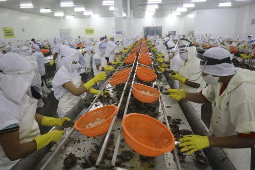 Ministro de la Producción visita a productores de conchas de abanico en Piura