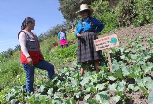 Más de 12,000 familias rurales de la región La Libertad han mejorado sus ingresos gracias a la ejecución de pequeños emprendimientos y negocios con el apoyo del proyecto Haku Wiñay de Foncodes. ANDINA/Difusión