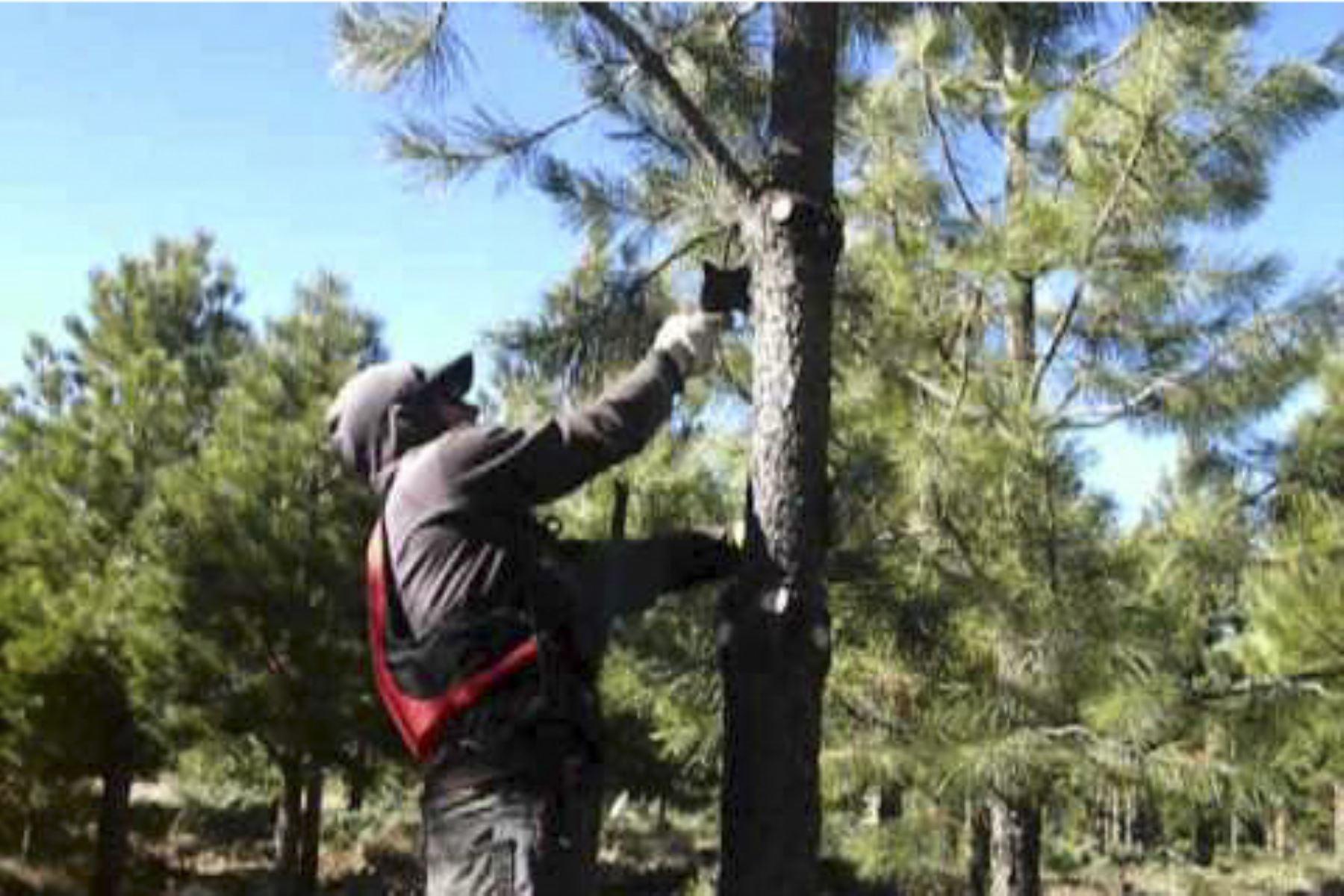 Pequeños productores serán capacitados en manejo silvicultural de plantaciones forestales, informó Agro Rural. Foto: ANDINA/Difusión