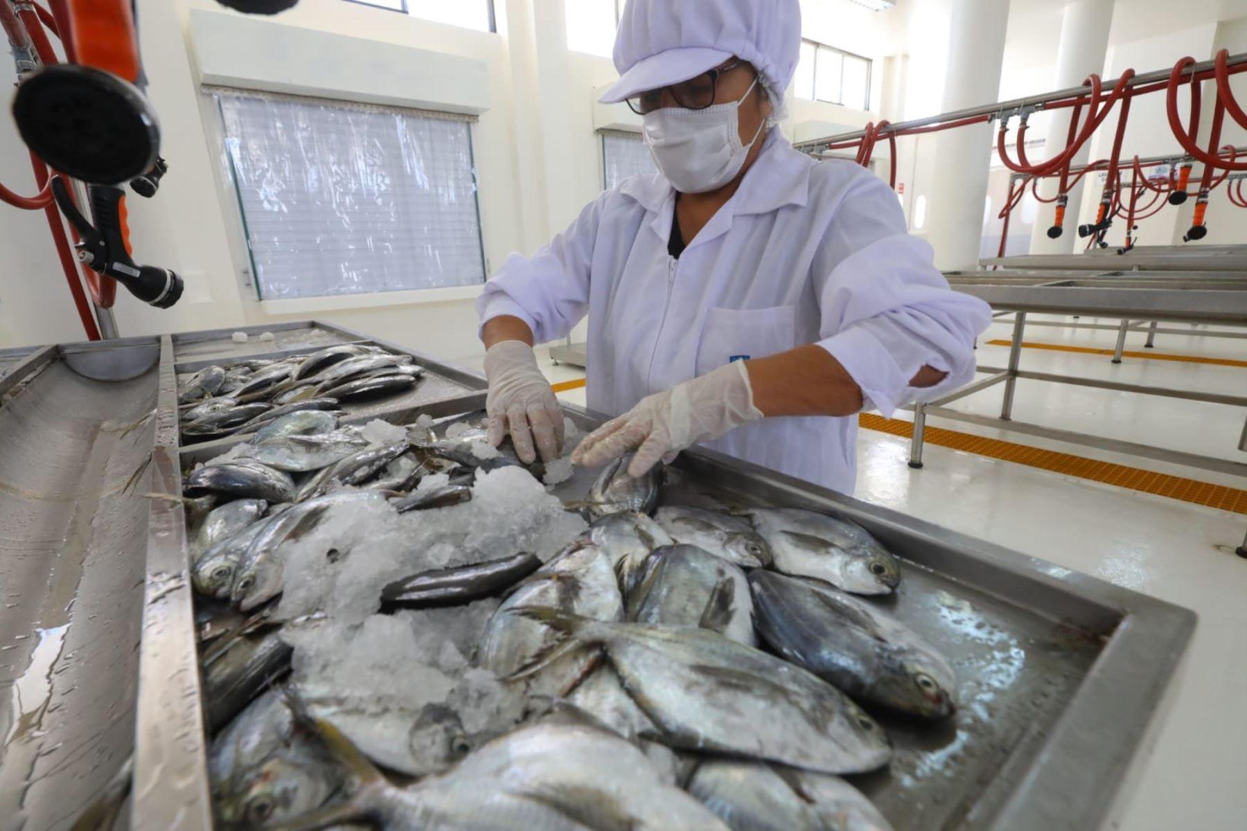 Ministro de la Producción, José Salardi pone en marcha el DPA San José en Lambayeque, infraestructura pesquera artesanal moderna y habilitada sanitariamente, para brindar mejores condiciones de trabajo y permitir una mayor productividad en el desarrollo de la actividad pesquera artesanal.  Foto: ANDINA/Produce