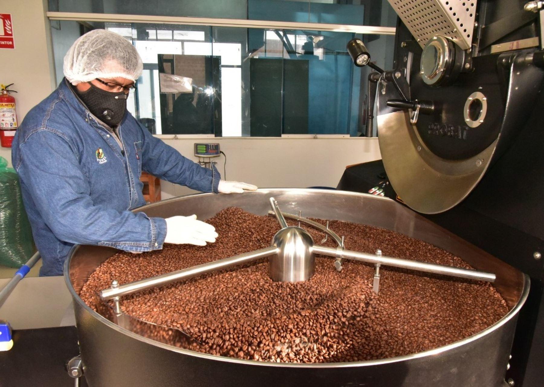 El café orgánico que se produce en la selva de Puno se posiciona en Europa, Asia y EE UU y existe una mayor demanda de este producto que beneficia a los caficultores puneños. ANDINA/Difusión