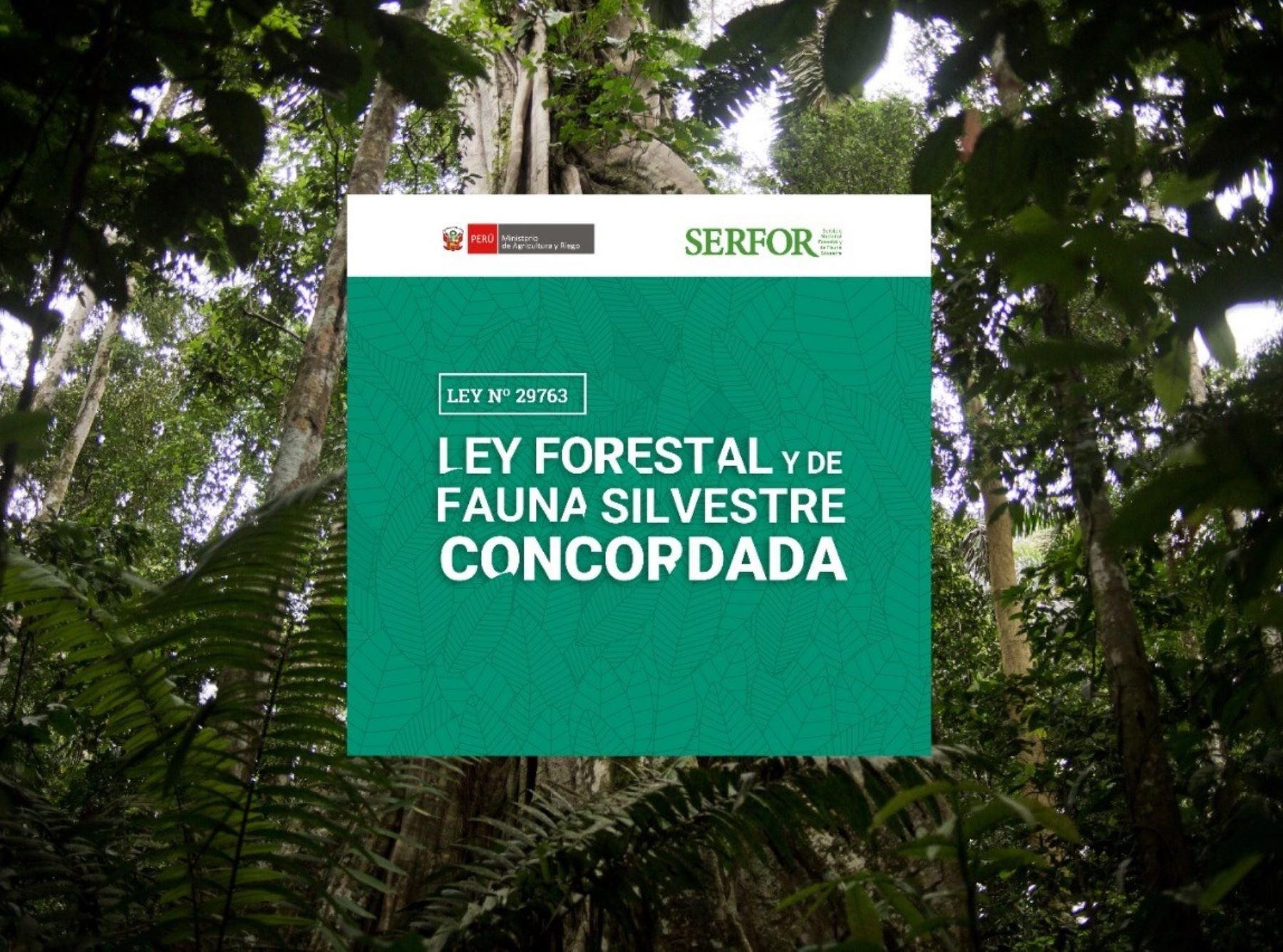 Serfor lanza novedoso aplicativo digital que facilita acceso a normativa forestal y de fauna silvestre. ANDINA/Difusión