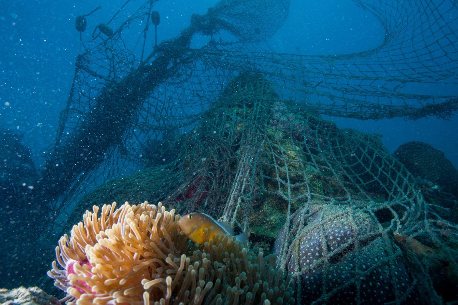 Las redes de pesca fantasmas (artes de pesca abandonados) lesionan y matan a más de 557 especies marinas. Foto: ANDINA/WWF