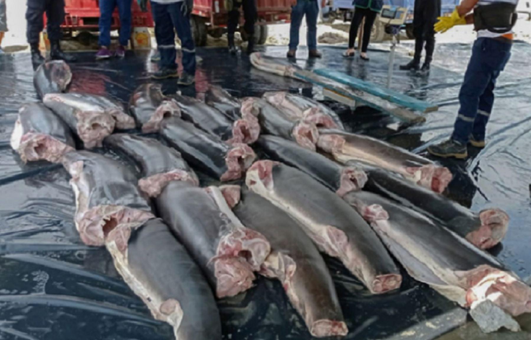 Ministerio de la Producción decomisa en la región Tumbes más de 22 toneladas de tiburón. Foto: Produce