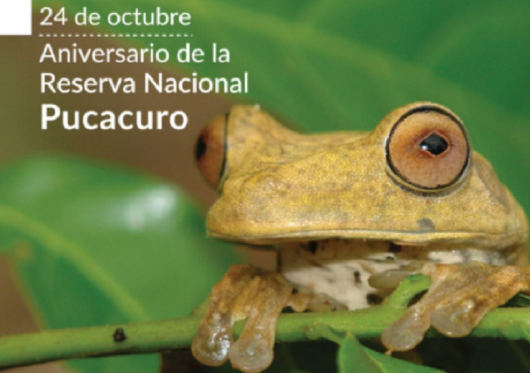 Reserva Nacional Pucacuro cumple 10 años conservando una singular biodiversidad en la Amazonía de la región Loreto. Foto: Sernanp