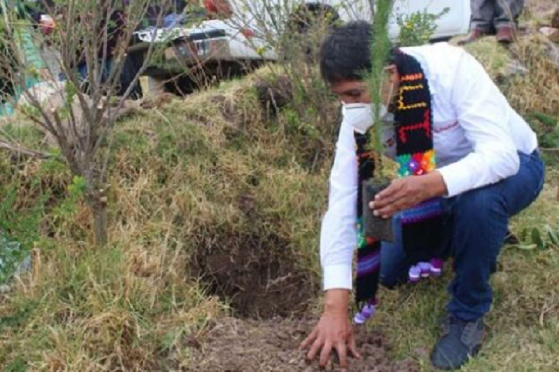 Minagri pone en marcha proyecto de reforestación en el distrito de Julcamarca, en la provincia de Angaraes, región Huancavelica. Foto: Minagri