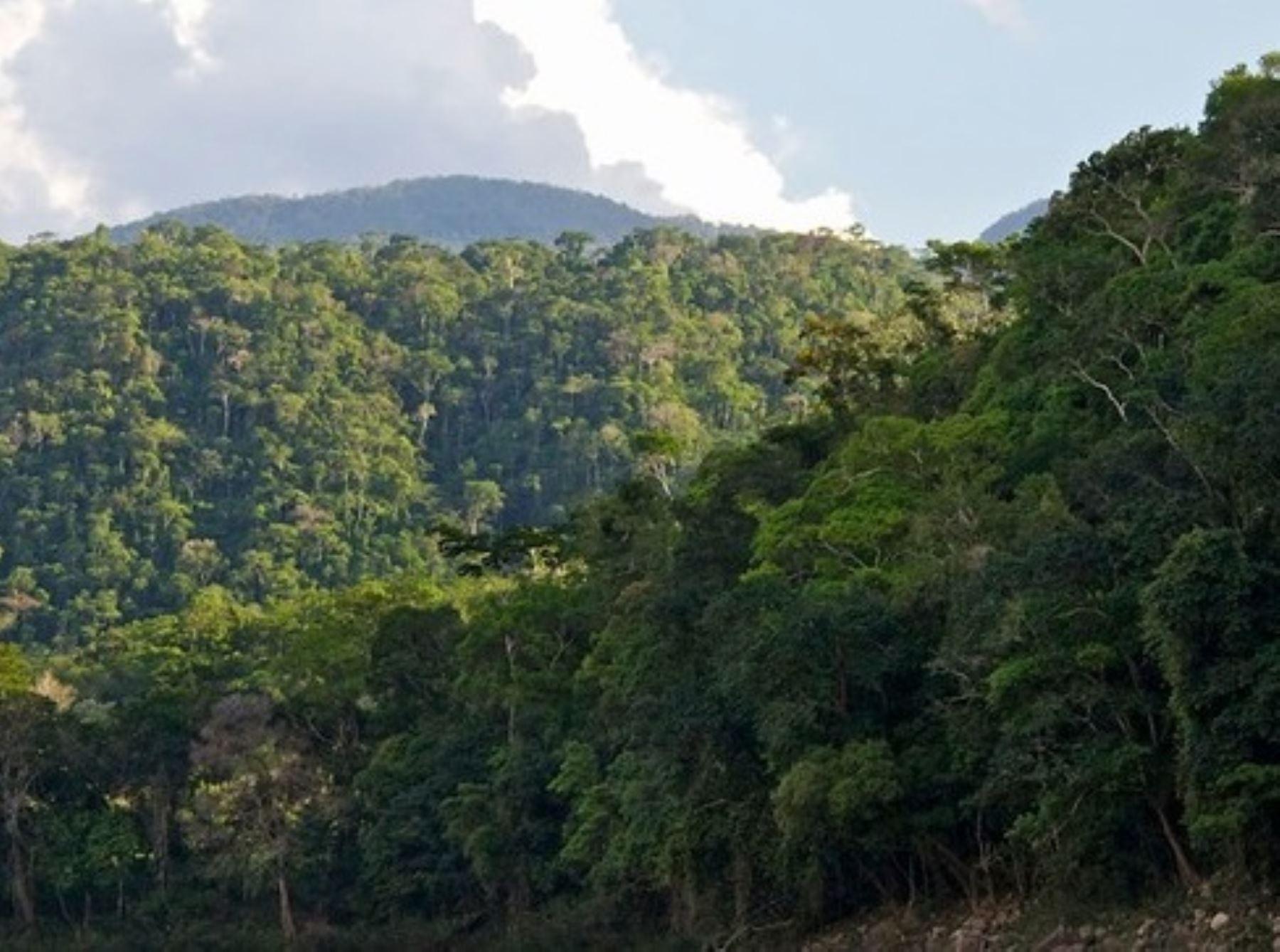 Gobierno refuerza estrategias para combatir la deforestación de los bosques y el Minam anunció que invertirá US$ 120 millones para ejecutar proyectos en la Amazonía peruana. ANDINA/Difusión