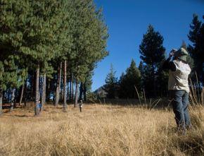 El Serfor resaltó la aprobación del Plan Nacional de Investigación Forestal y de Fauna Silvestre 2020-2030.