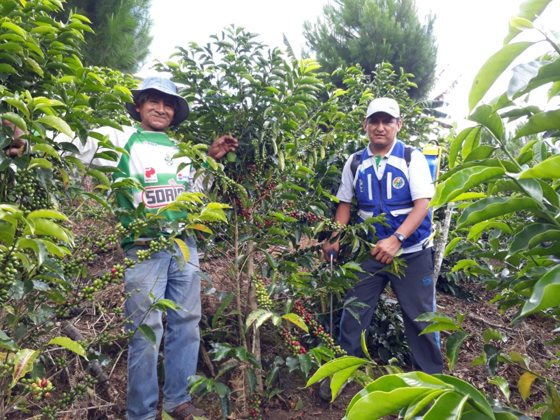 Candelaria se llama la nueva marca de cafés especiales de Puno que conquista paladares. ANDINA/Difusión