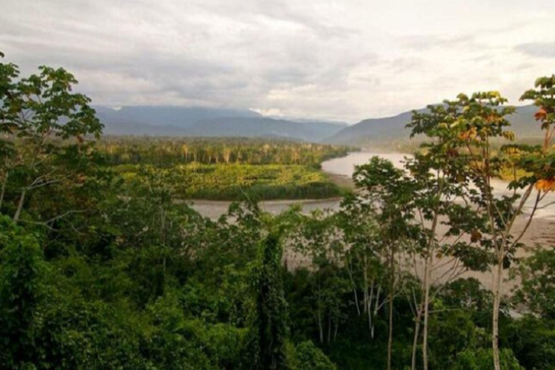 El ministro Gabriel Quijandría fue enfático al mencionar que el 51 % de las emisiones de gases de efecto invernadero provienen de la pérdida de bosques y eso es algo que debe detenerse. ANDINA/Minam