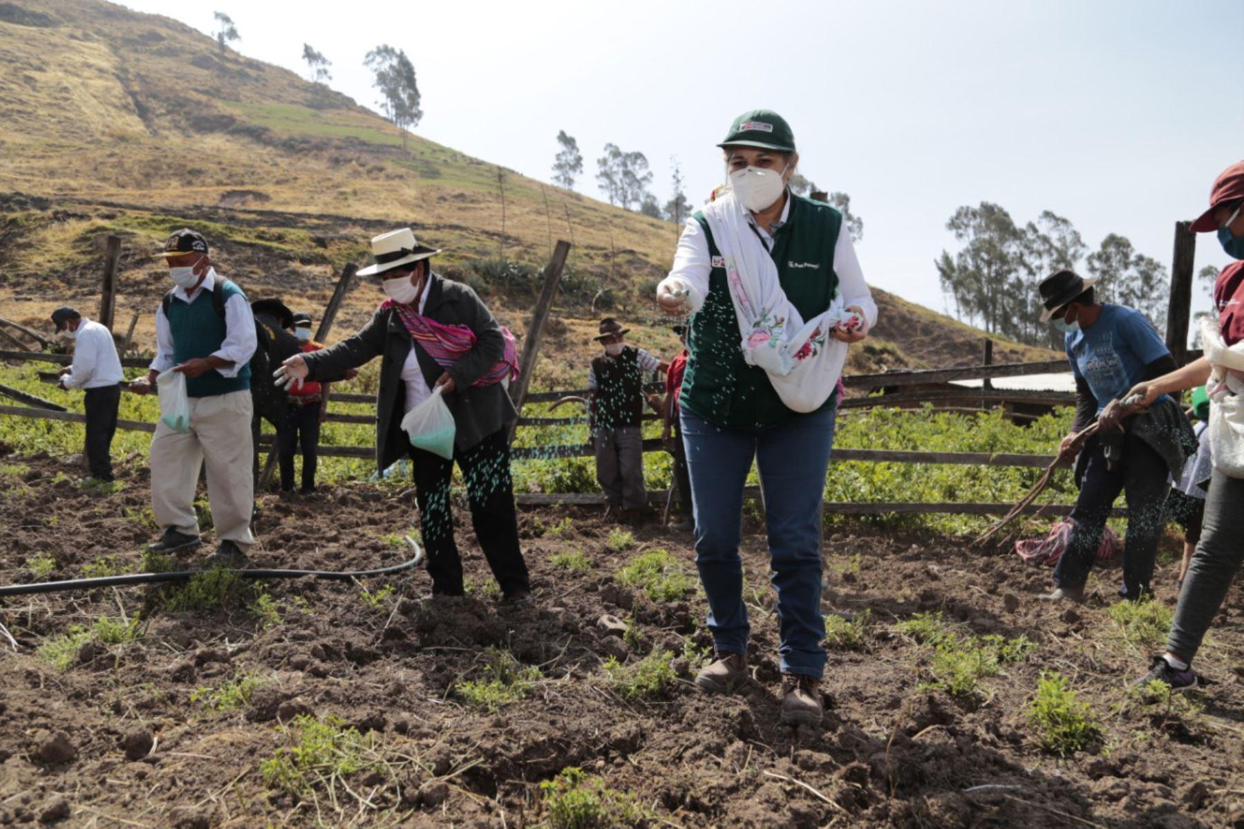 Agro Rural, unidad ejecutora del Ministerio de Agricultura y Riego, realizó el lanzamiento oficial de la Campaña de Siembra de Pastos y Forrajes 2020-2021 en Lima Provincias. Foto: Minagri