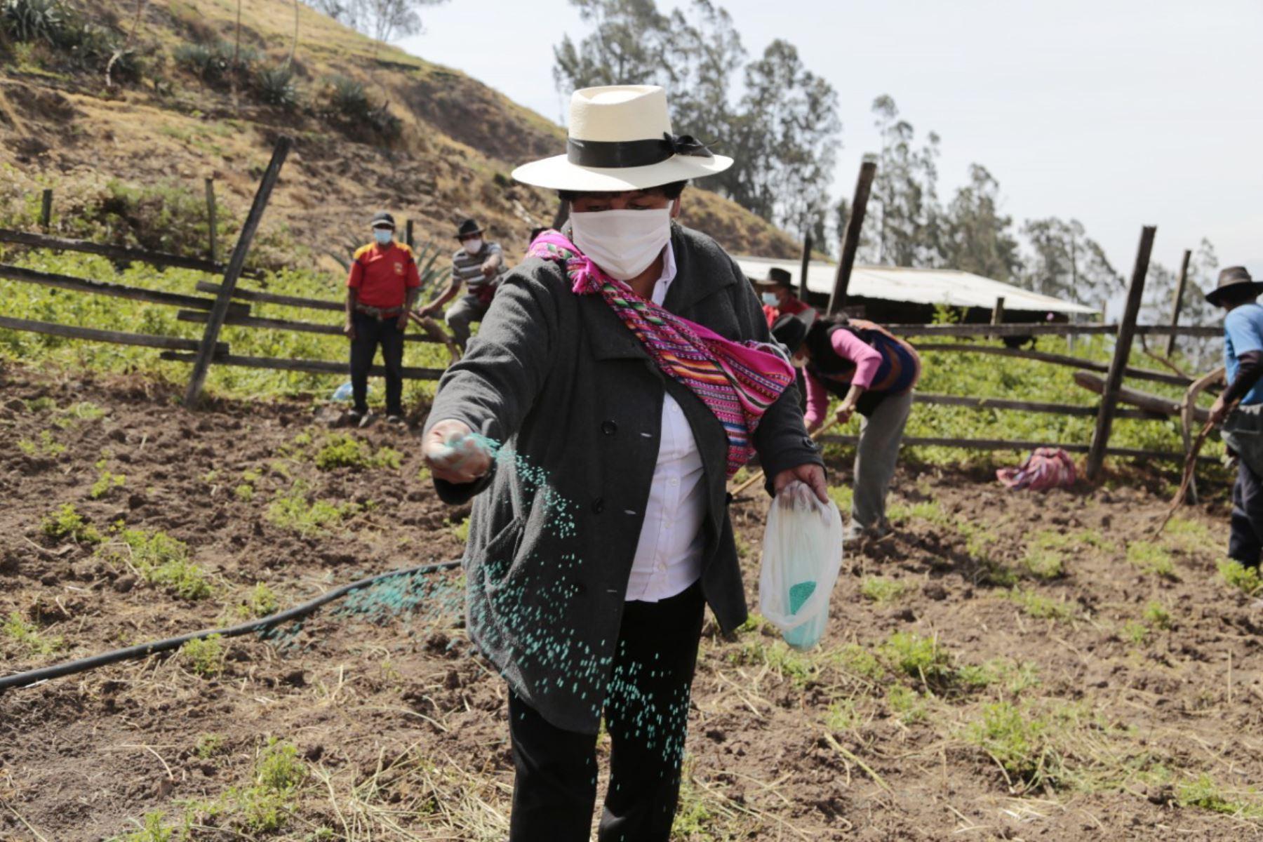 La Campaña de Siembra de Pastos y Forrajes 2020-2021 en Lima Provincias favorecerá de manera directa a un total de 1 260 familias rurales, dedicadas a las diferentes actividades ganaderas. Foto: Minagri
