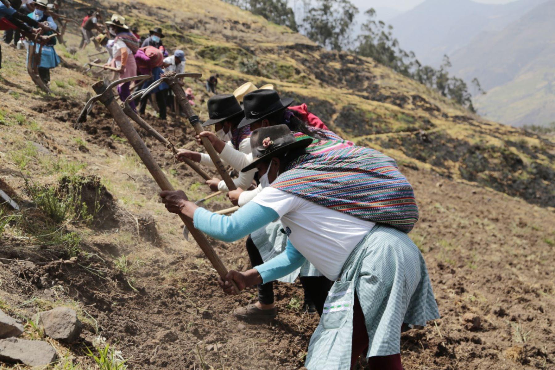 mas-de-1200-familias-ganaderas-de-lima-se-benefician-con-campana-de-siembra-de-pastos