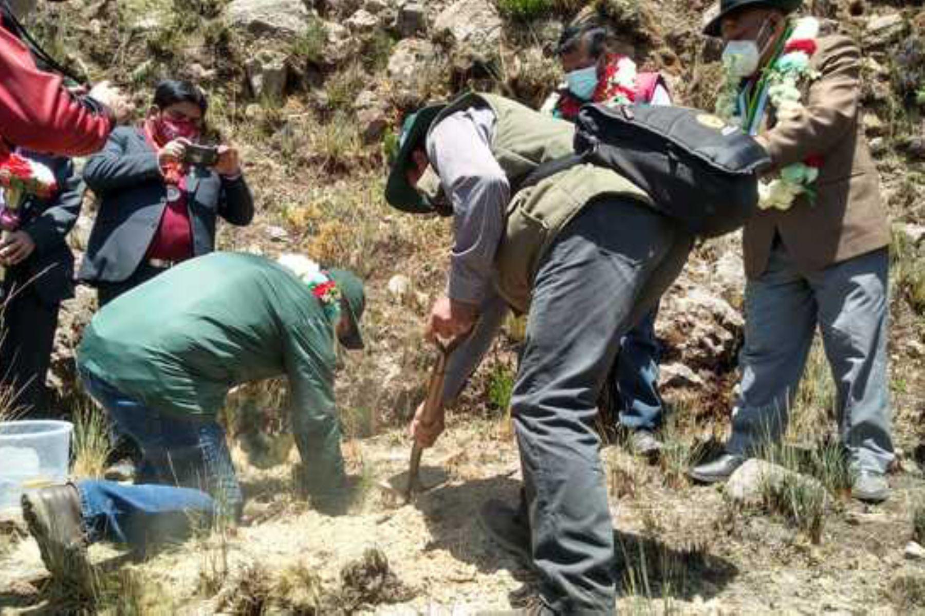 Ministerio de Agricultura y Riego, dispuso apoyar la iniciativa de un grupo de emprendedores de la zona, para la creación de áreas de cultivo de hongos pineros. Foto:Minagri