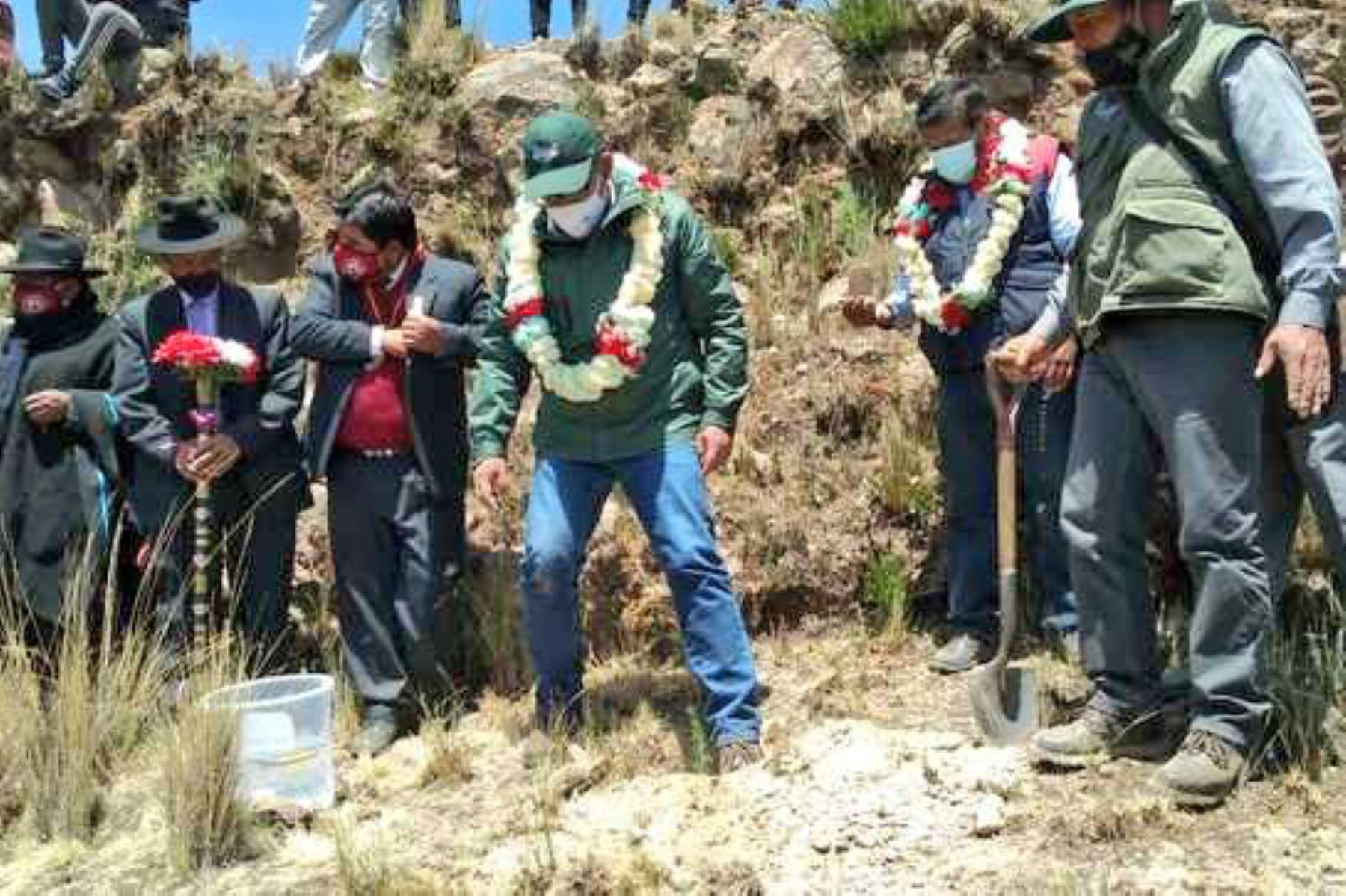 El Proyecto Especial Binacional Lago Titicaca – PEBLT, por encargo del Minagri asiste en la siembra de plantones de pinos de la especie radita, a pobladores  del distrito de Ollaraya en Puno . Se dispuso la entrega de más de 60 mil pinos. Foto: Minagri