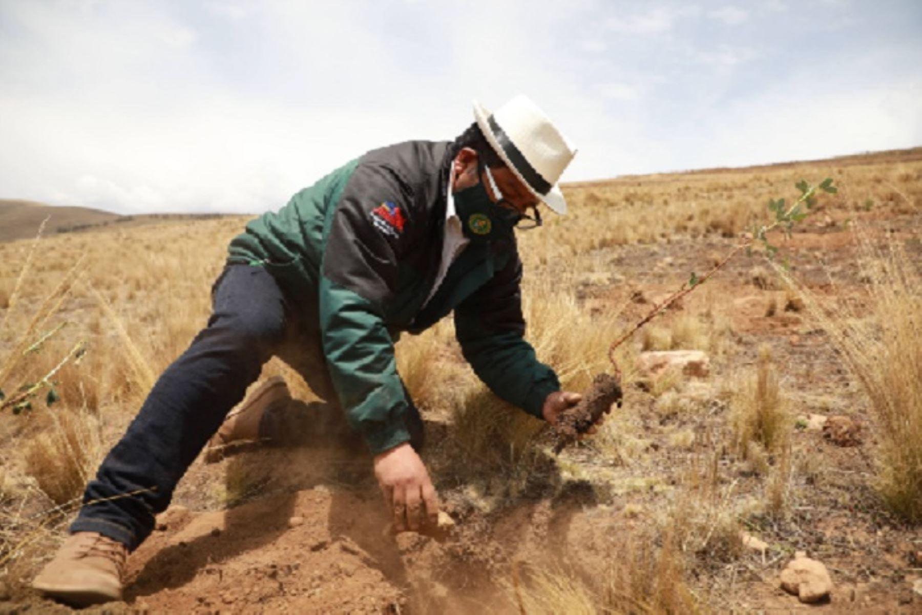 inician-plantacion-de-800000-arboles-en-las-nueve-provincias-de-junin