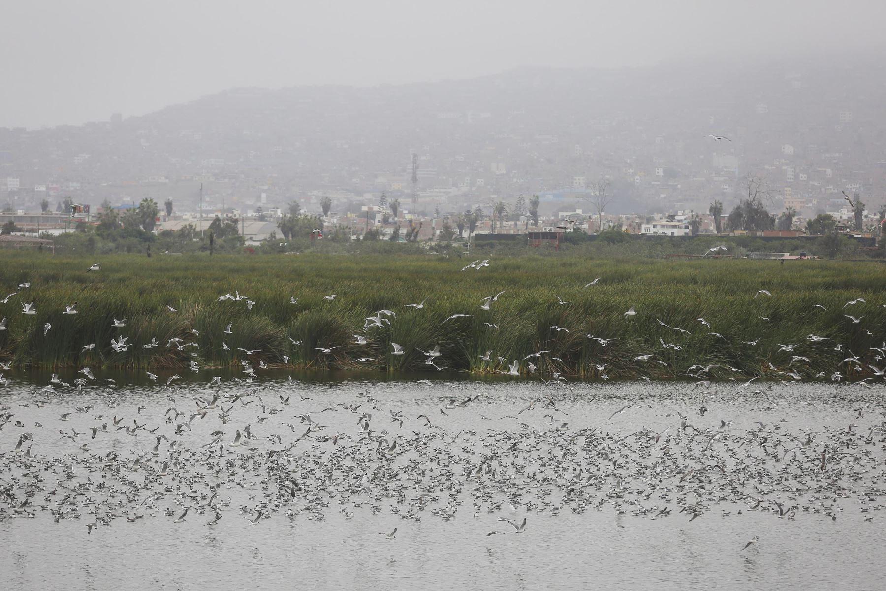 Festival de las Aves Migratorias, organizado por Prohvilla, dará a conocer más de sus historias y recorridos, así como los beneficios para la ciudad. Foto: ANDINA/Difusión