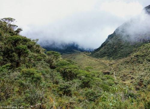 La nueva área de conservación privada Unchog, se ubica en el distrito de Churubamba, provincia y región Huánuco y protege un importante bosque de la zona. Foto: Mincetur/Carlos Calle
