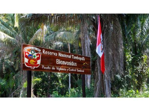 El ministro del Ambiente, Gabriel Quijandría resaltó las acciones para reforestar la Reserva Nacional Tambopata y las acciones intersectoriales para recuperar esta área natural protegida ubicada en Madre de Dios afectada por la minería ilegal. ANDINA/Difusión