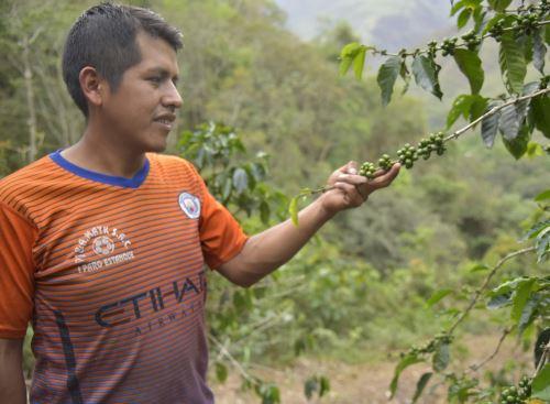 Conoce a Prudencio Ochochoque, el joven cafetalero de Puno ganador de una medalla de oro en reciente VI Concurso Internacional de Cafés Tostados al origen 2020 realizado en Francia.