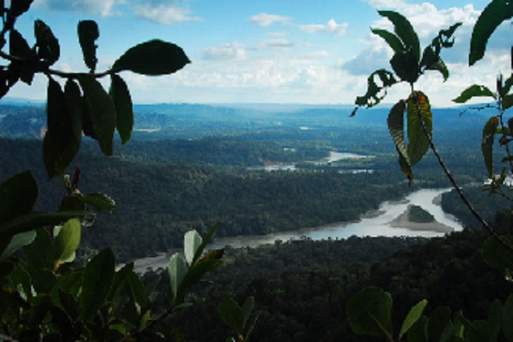"""Bosques amazónicos del Perú pueden captar financiamiento con los  """"bonos de carbono"""". ANDINA/Difusión"""