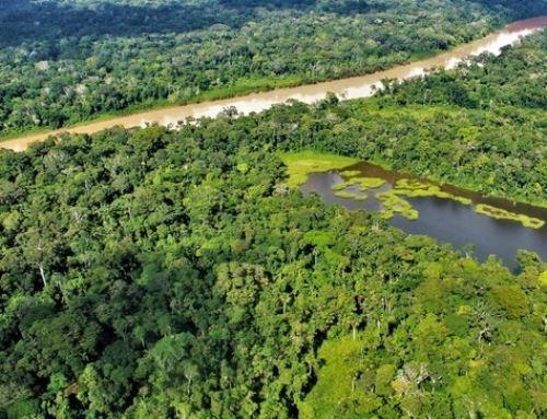 La deforestación se redujo en diez regiones con bosques amazónicos durante el 2019, destacó el Ministerio del Ambiente.