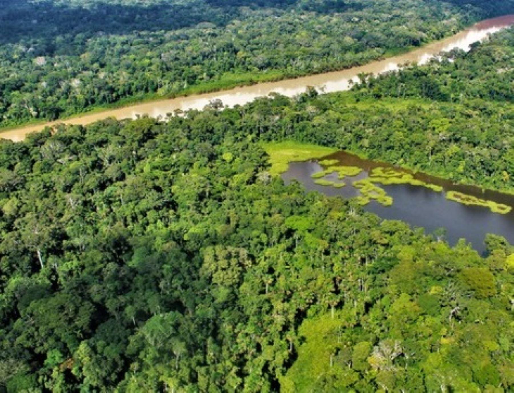 El Minam anunció que se invertirán US$ 50 millones para la ejecución de cuatro proyectos para reducir la deforestación en la Amazonía peruana. ANDINA/Difusión