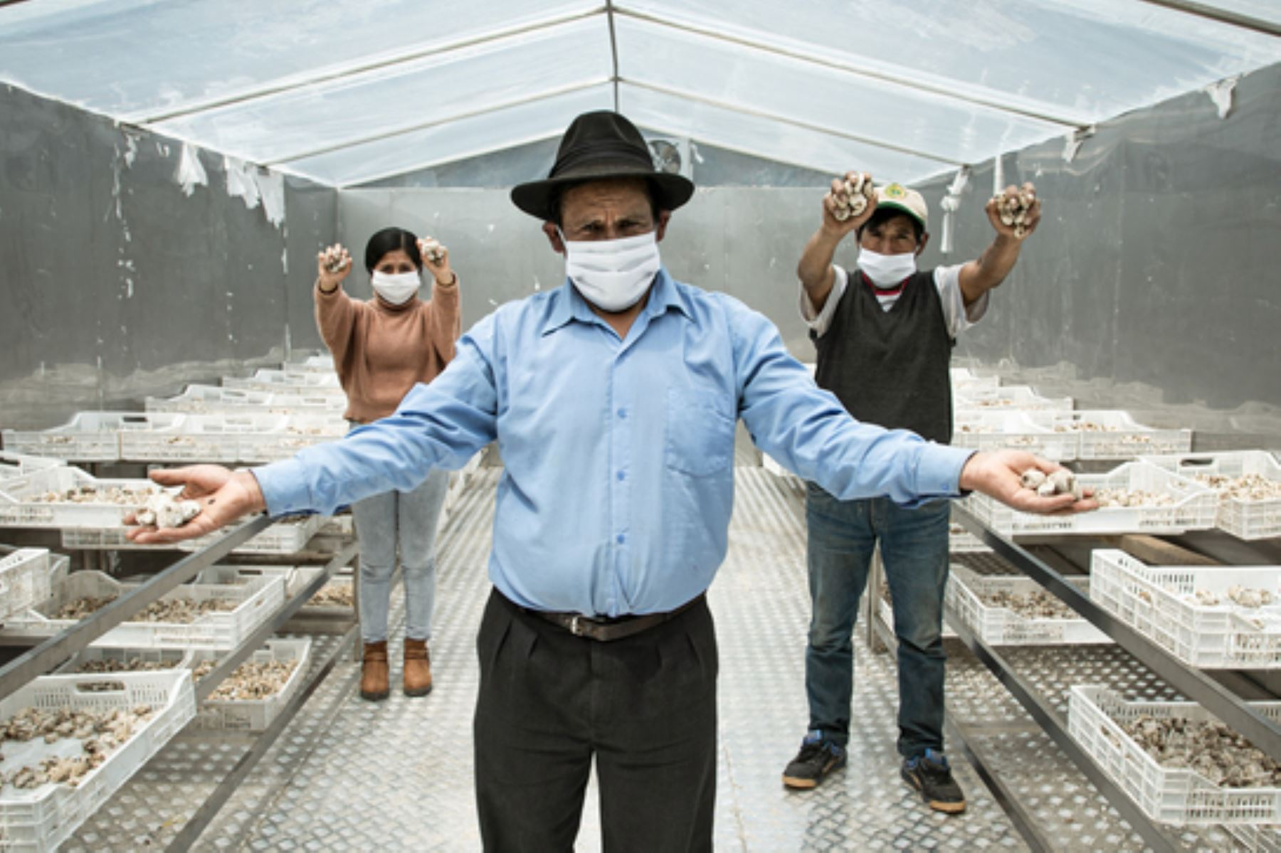 Agricultores de Andahuaylas (Apurímac) dieron valor agregado a sus papas tras la adopción de tecnología. Foto: ANDINA/Difusión