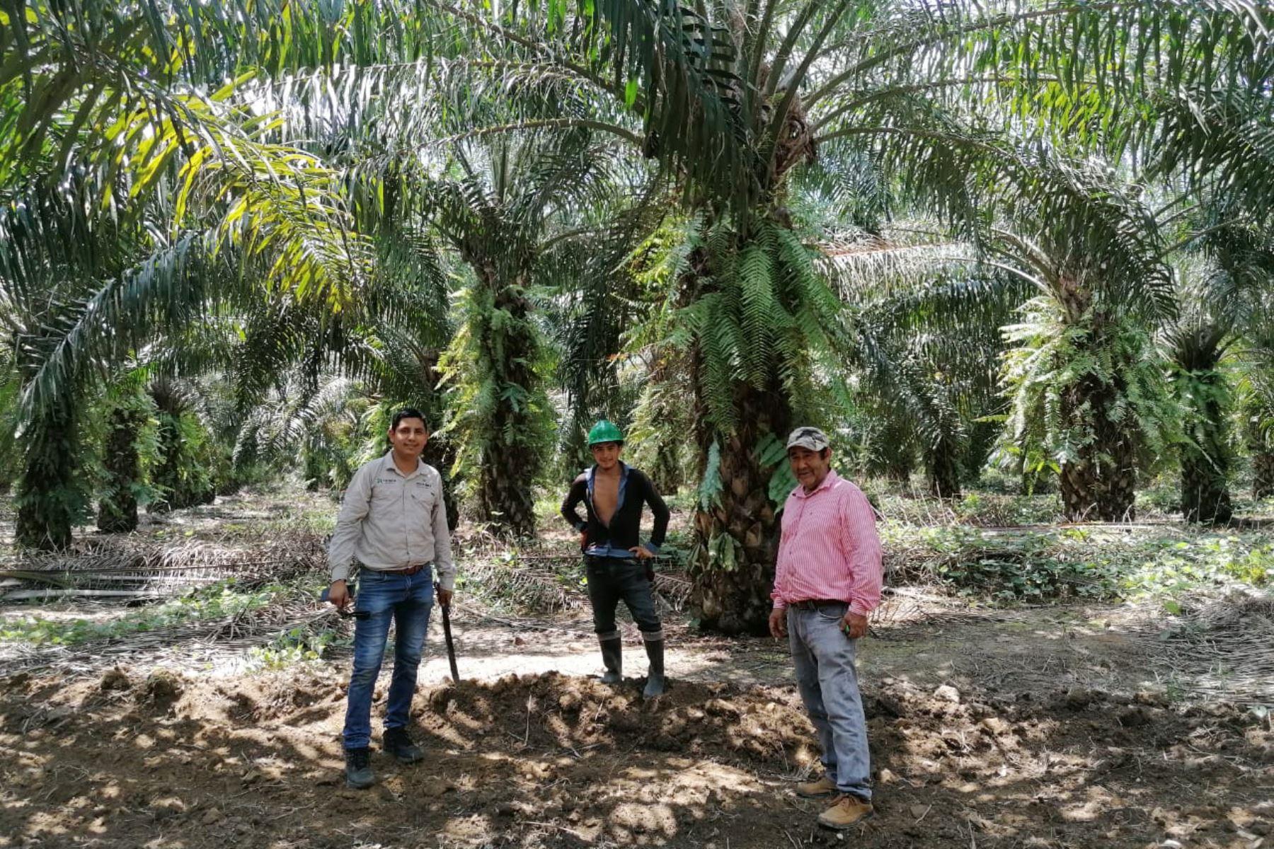La estrategia es reducir la deforestación, conservar la biodiversidad y promover buenas prácticas en los cultivos de palma en la Amazonía peruana.ANDINA/Difusión