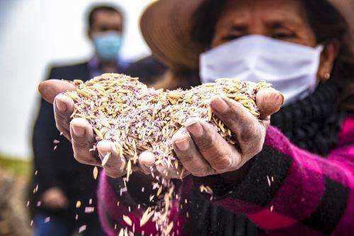 Agro Rural inicia jornada de instalación de 5,650 kilogramos de semillas de pastos cultivados en Huaral