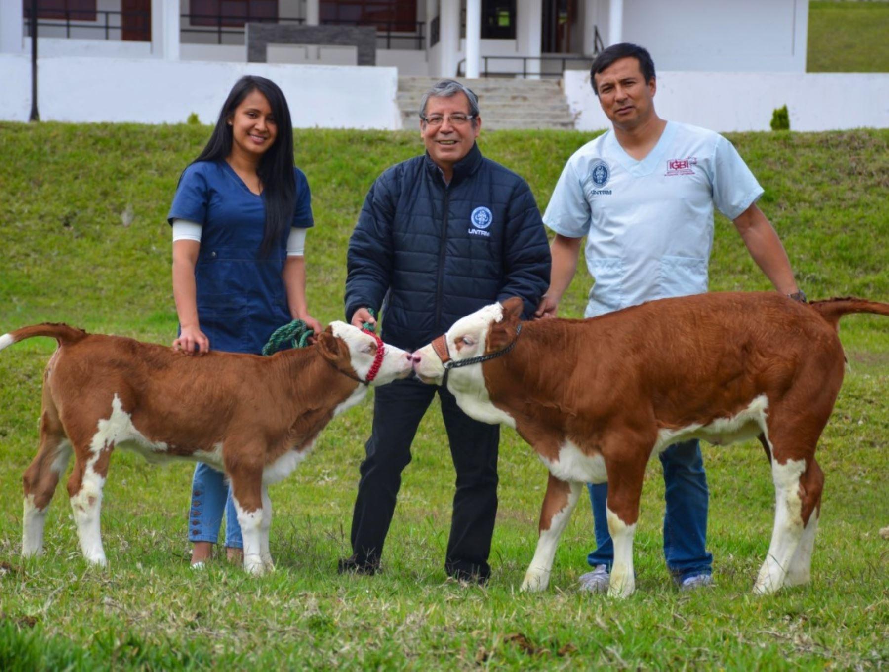 Científicos de la Universidad Nacional Toribio Rodríguez de Mendoza de Amazonas obtuvieron dos clones de una vaca alemana. ANDINA/Difusión