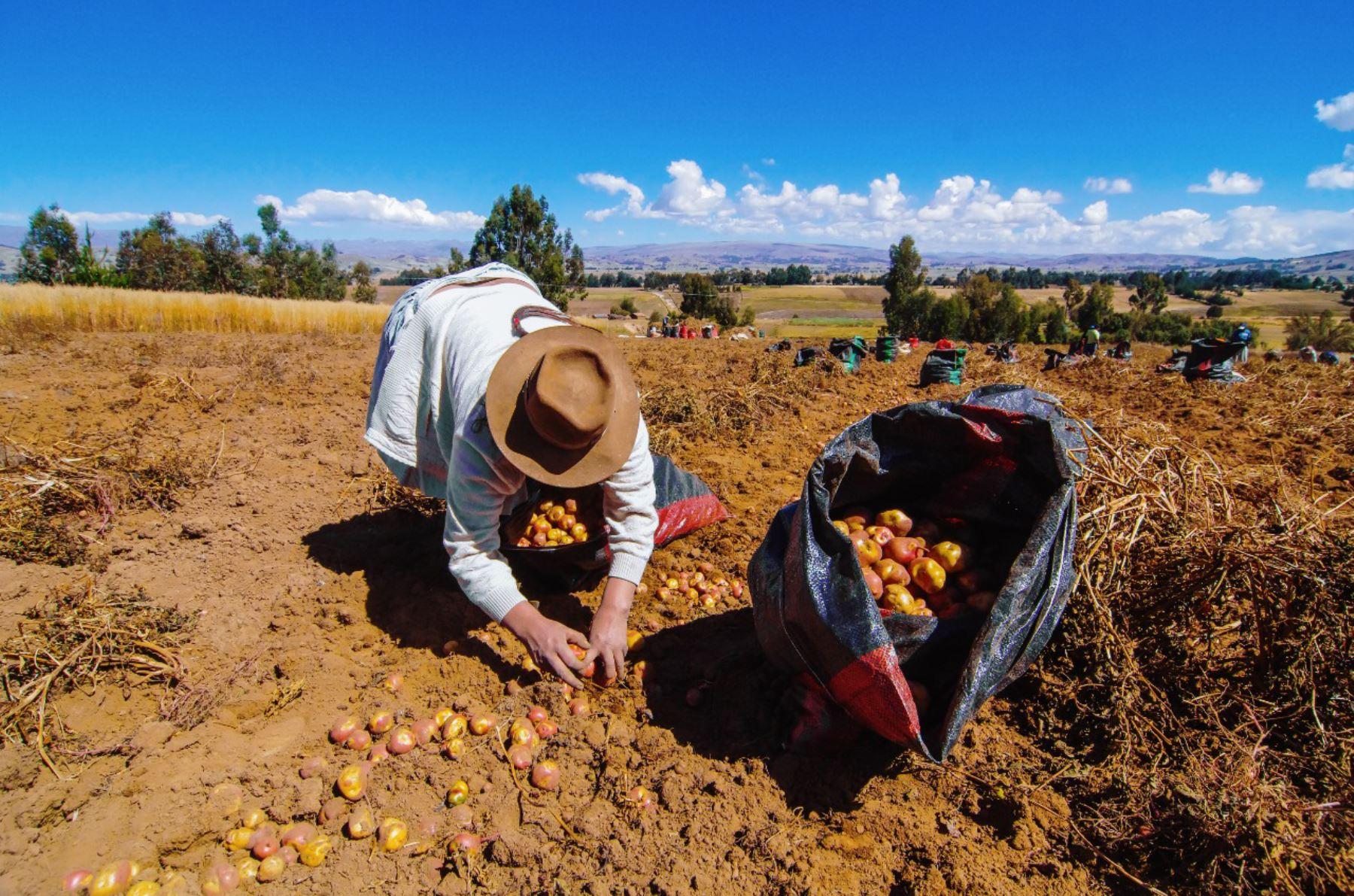 Investigación de la Universidad Católica San Pablo de Arequipa busca desarrollar una tecnología inteligente para dar mayor competitividad a la agricultura. ANDINA/Difusión