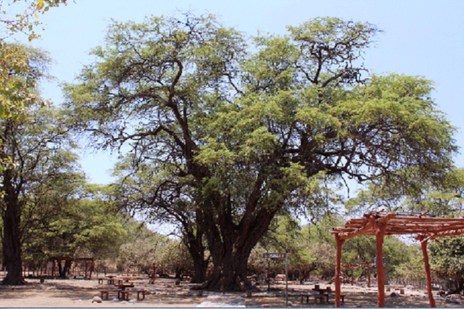 Un árbol patrimonial es aquel que se considera excepcional en la región por su gran tamaño, belleza, longevidad, originalidad de sus formas, vinculación con el paisaje, por su importancia cultural, histórica, científica o educativa.