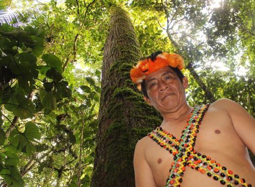Comunidad indígena Naranjos, ubicada en la provincia de San Ignacio, región Cajamarca, destaca en aprovechamiento sostenible de madera, informó el Serfor.Foto: ANDINA/Difusión.