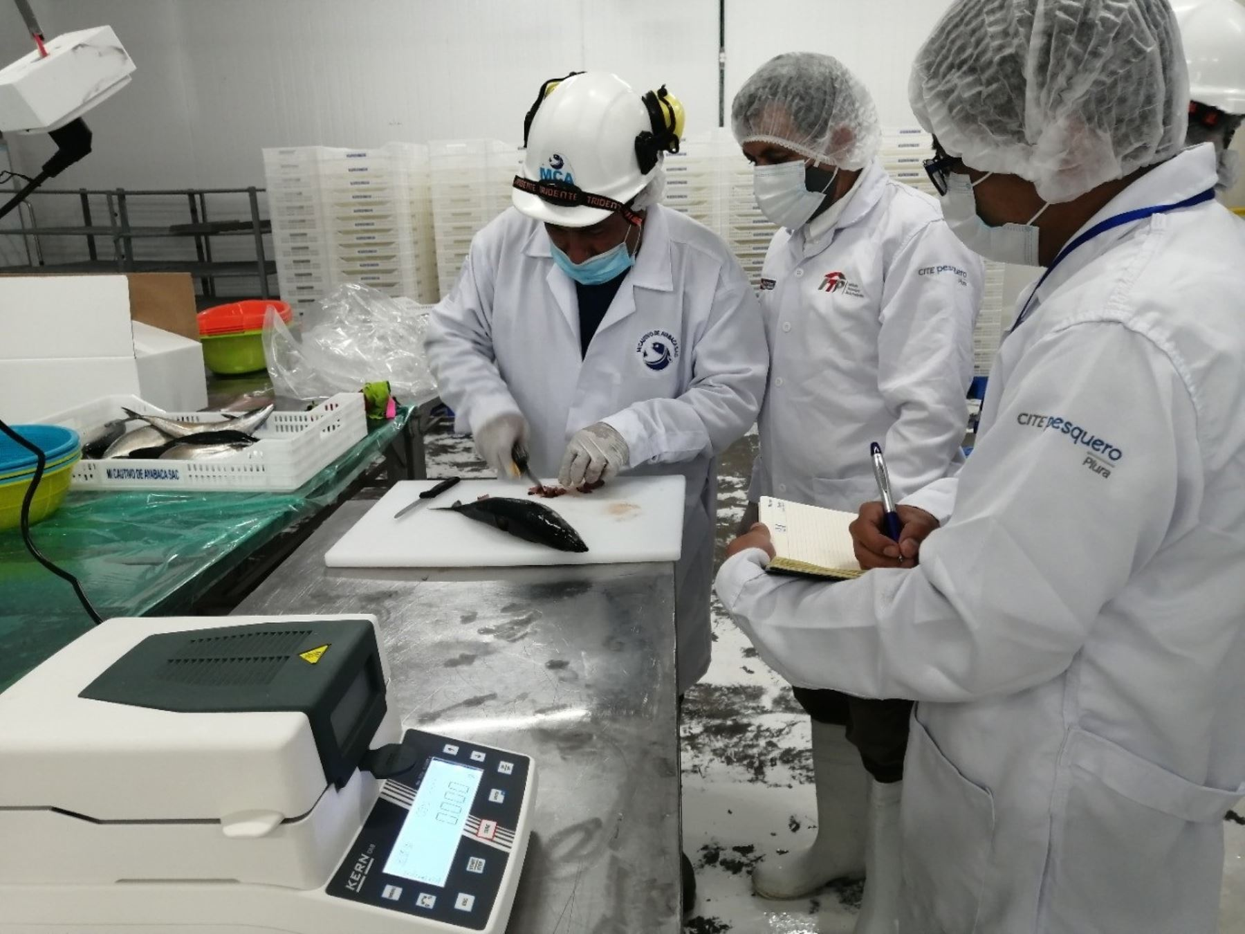 piura-implementan-laboratorio-movil-para-brindar-asistencia-a-emprendedores-acuicolas