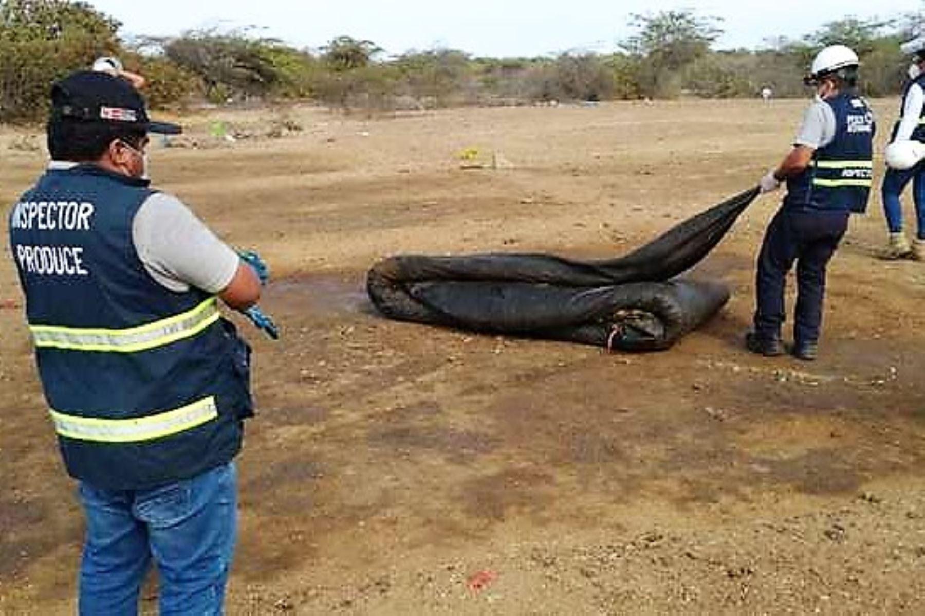 talara-destruyen-dos-plantas-ilegales-donde-se-procesaban-residuos-pesqueros