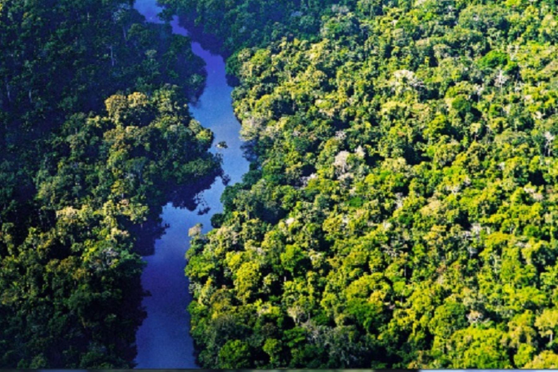 Los bosques amazónicos captan el dióxido de carbono de la atmósfera y contribuyen a reducir el impacto de este gas de efecto invernadero que incide en el calentamiento global y el cambio climático. Foto: ANDINA/difusión.