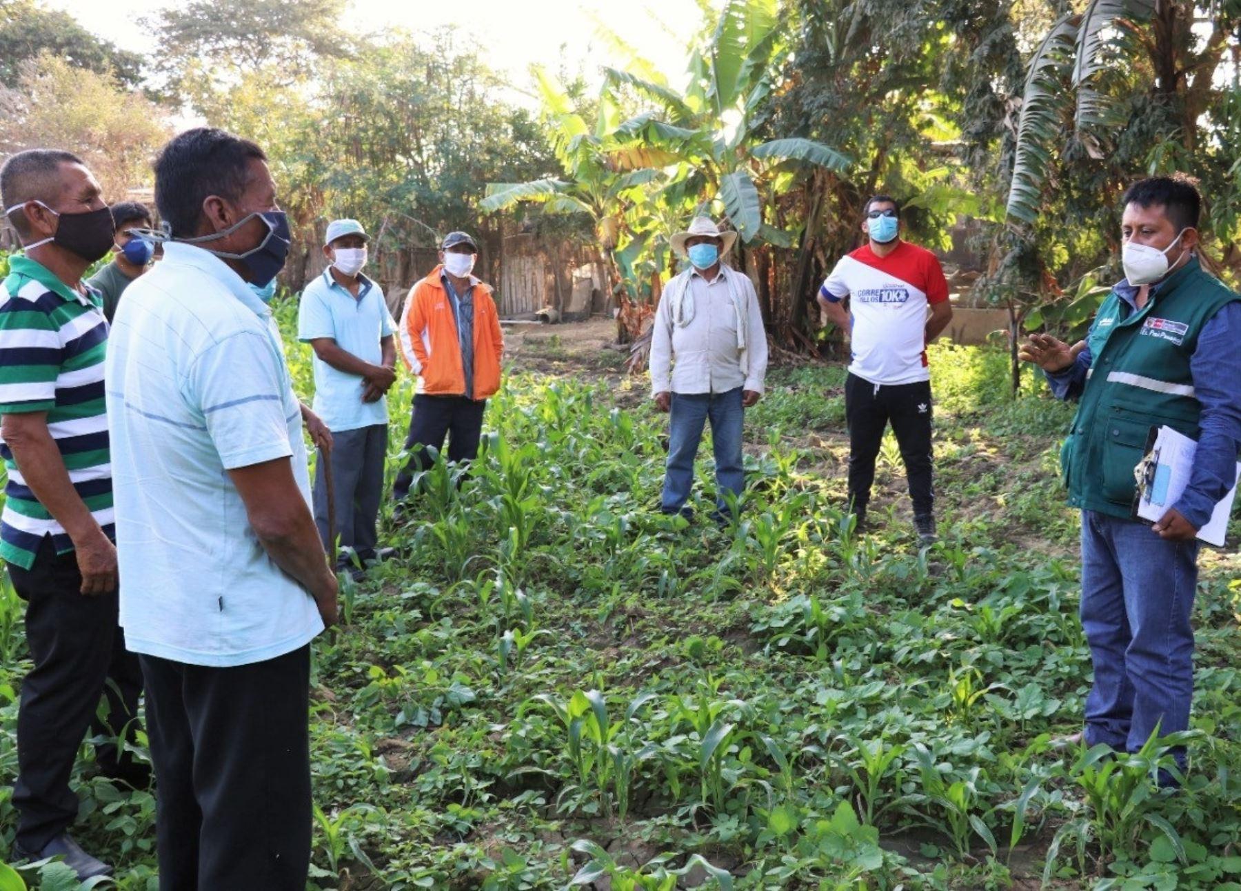 Especialistas del Senasa instalarán y conducirán escuelas de campo en Lambayeque para fortalecer la agricultura familiar de esa región. Foto: ANDINA/difusión.