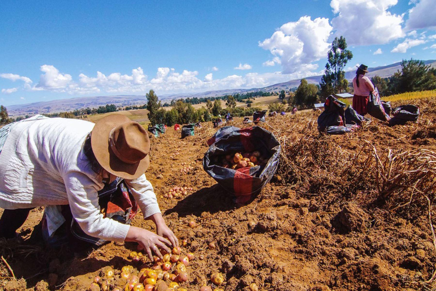agrobanco-preve-colocar-s-300-mills-en-2021-y-atender-a-30000-agricultores