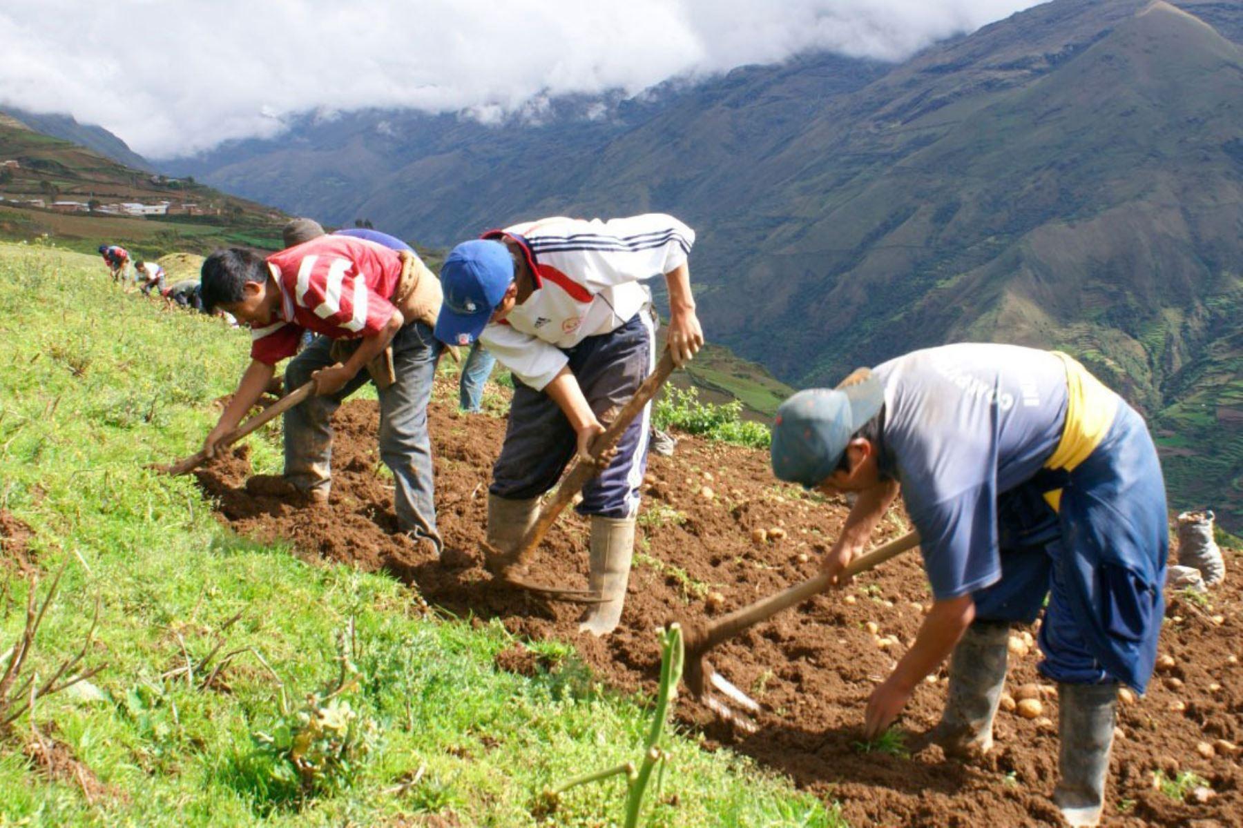 Productores agrarios. Foto: ANDINA/Difusión.
