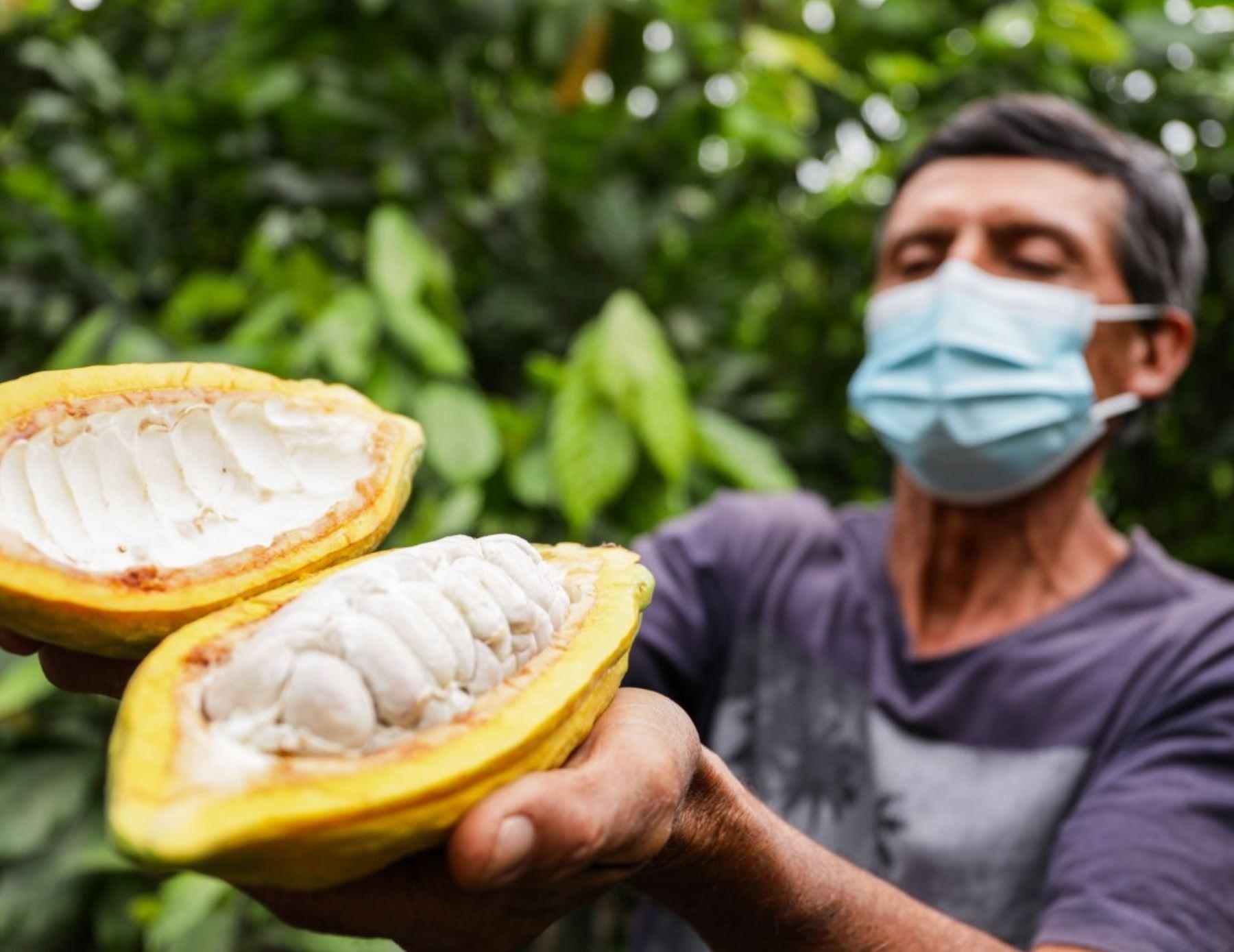 Piura se posiciona como productor de cacao de calidad y productores de cacao blanco orgánico de esta región triunfaron en el XIV Concurso Nacional de Cacao de Calidad. ANDINA/Difusión