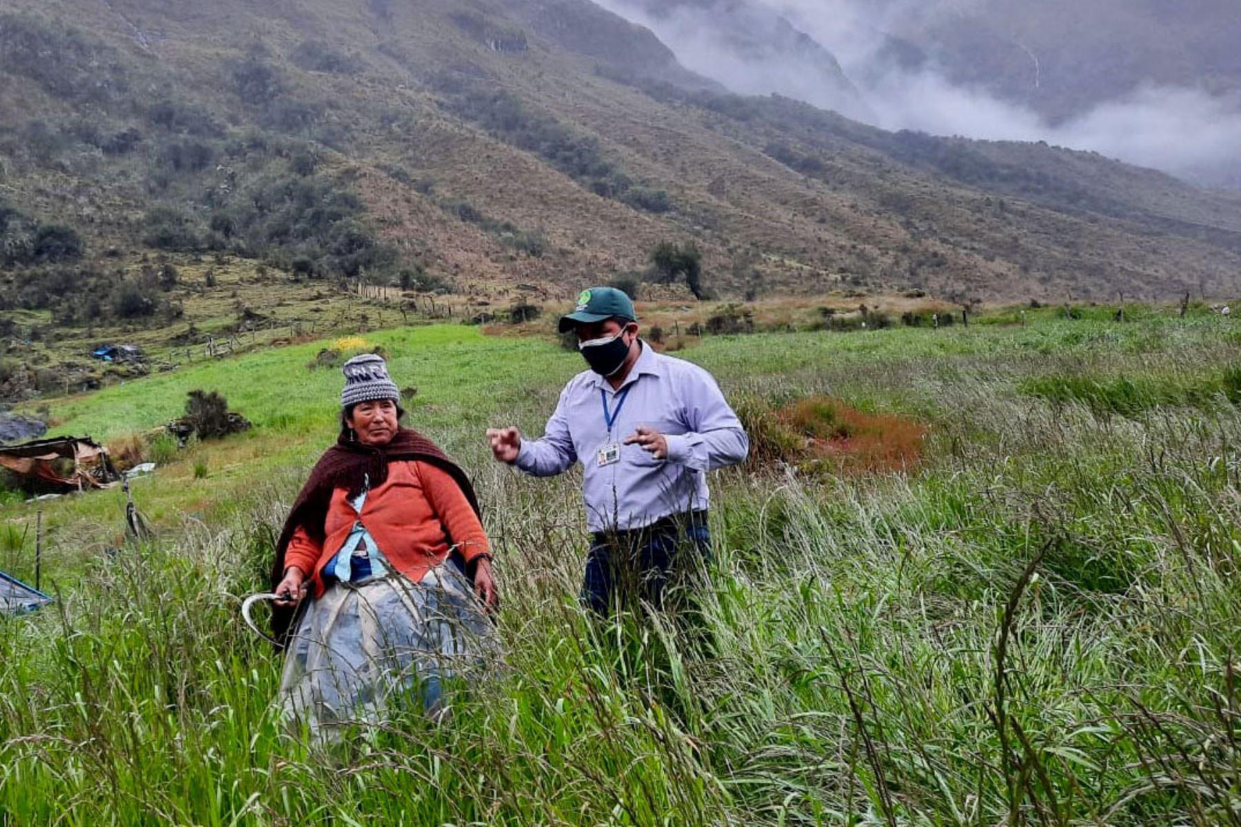 Las brigadas agrarias de la Agencia Agraria Satipo (AAS) brindaron capacitación en buenas prácticas agrícolas, manejo integrado de plagas e hicieron el análisis de suelo de los cultivos. Foto: ANDINA/Difusión