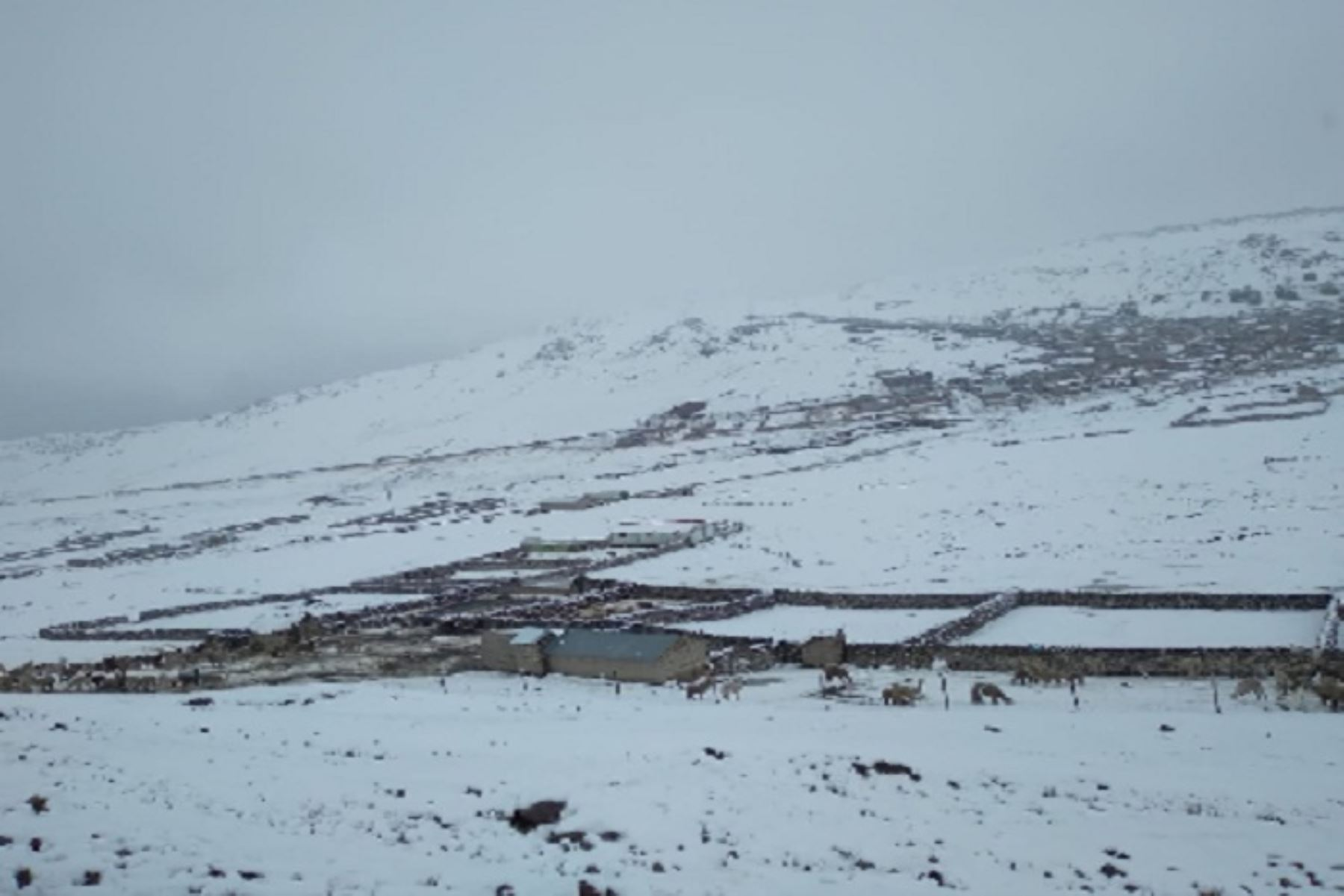 nevadas-intensas-alcanzaron-hasta-40-centimetros-de-altura-en-zonas-de-puno