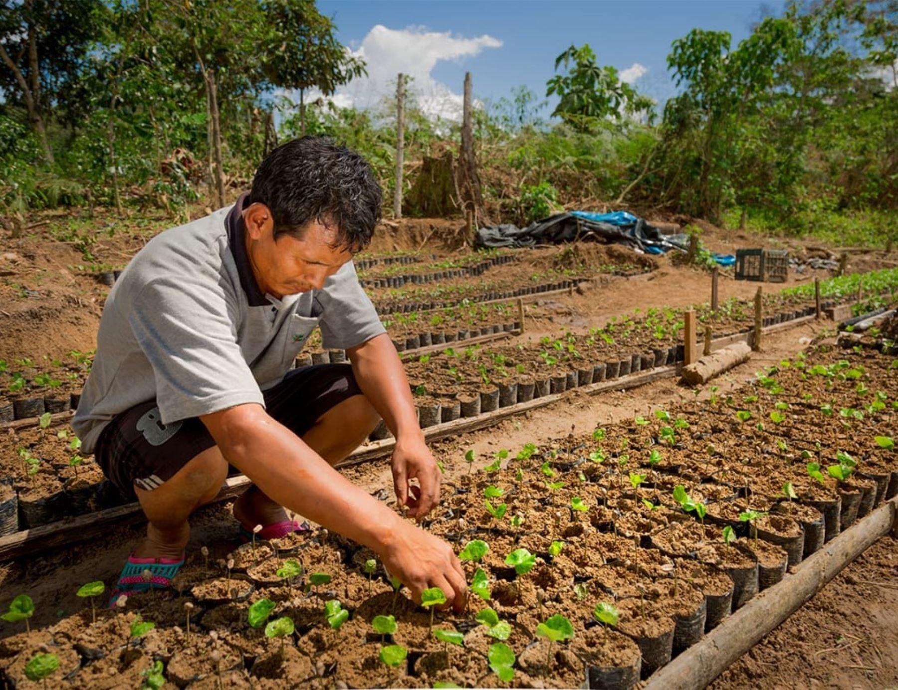 vraem-productores-de-cafe-renovaran-certificacion-organica-para-acceder-a-mercado-mundial