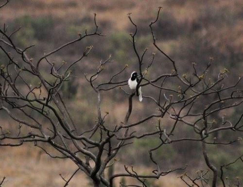 Bosque Urum, conoce la nueva área de conservación privada de Lambayeque, la tercera de esta región. ANDINA/Difusión