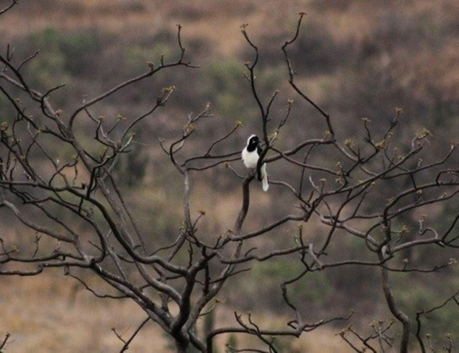 bosque-urum-conoce-la-nueva-area-de-conservacion-privada-de-lambayeque