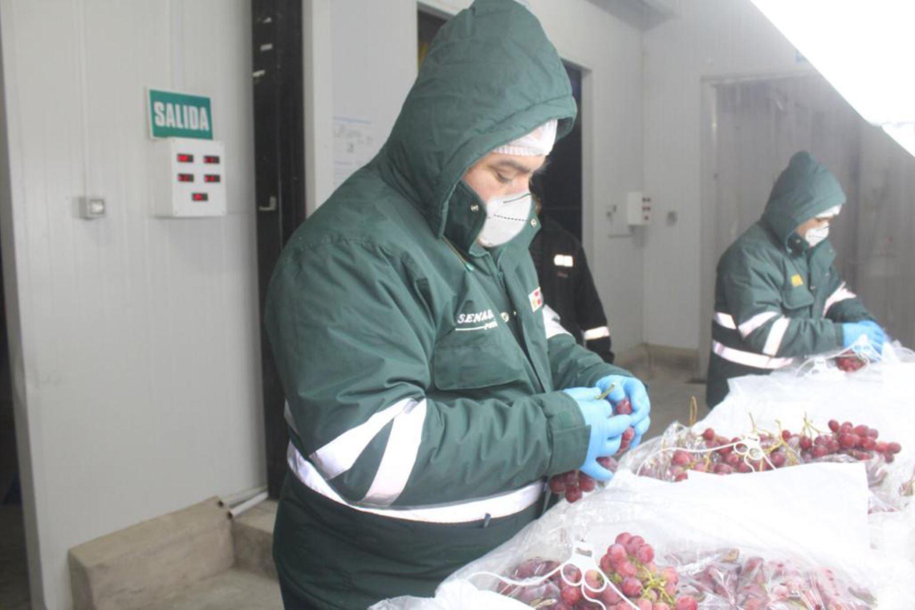 region-arequipa-exporto-mas-de-9000-toneladas-de-uva-a-17-paises