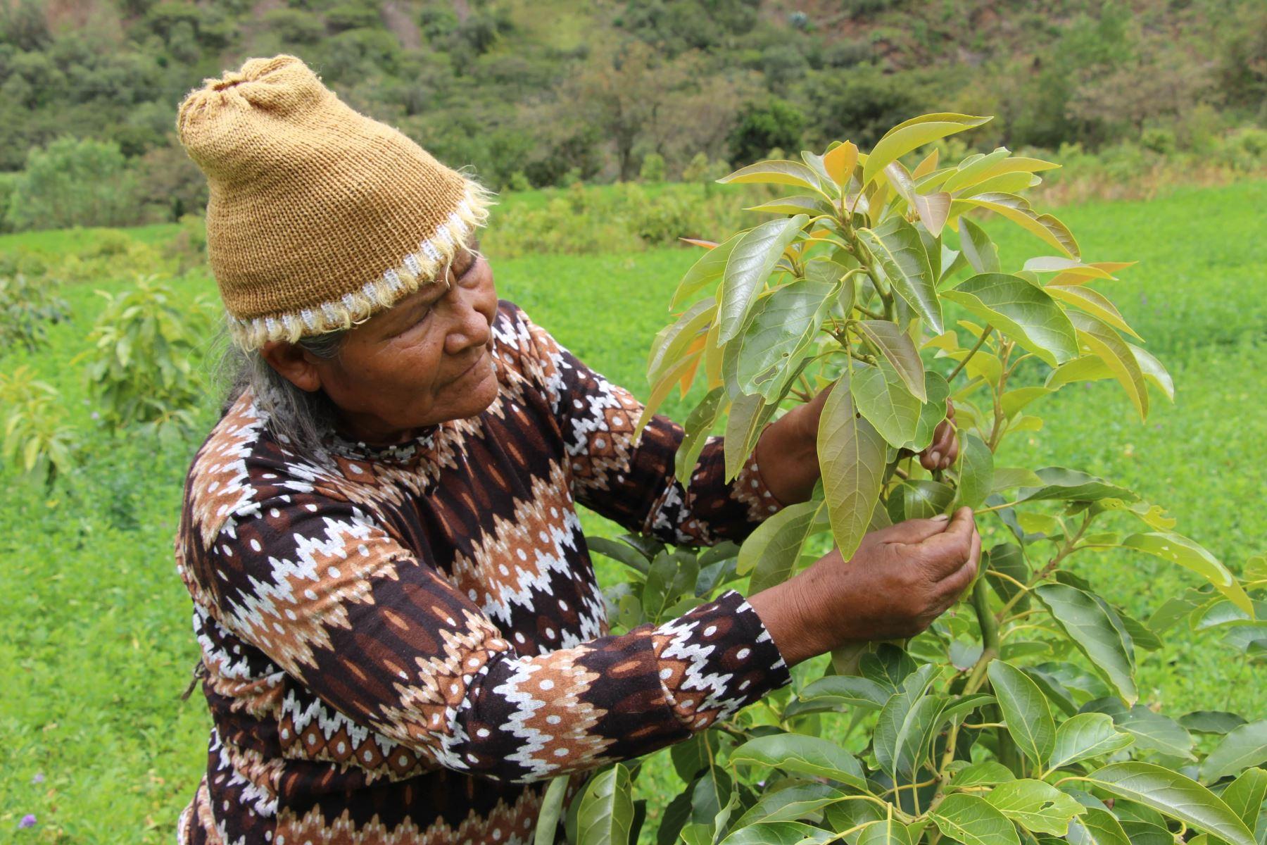 Esta iniciativa forma parte del manejo agronómico del campo y buscan mejorar la calidad de vida del agricultor.