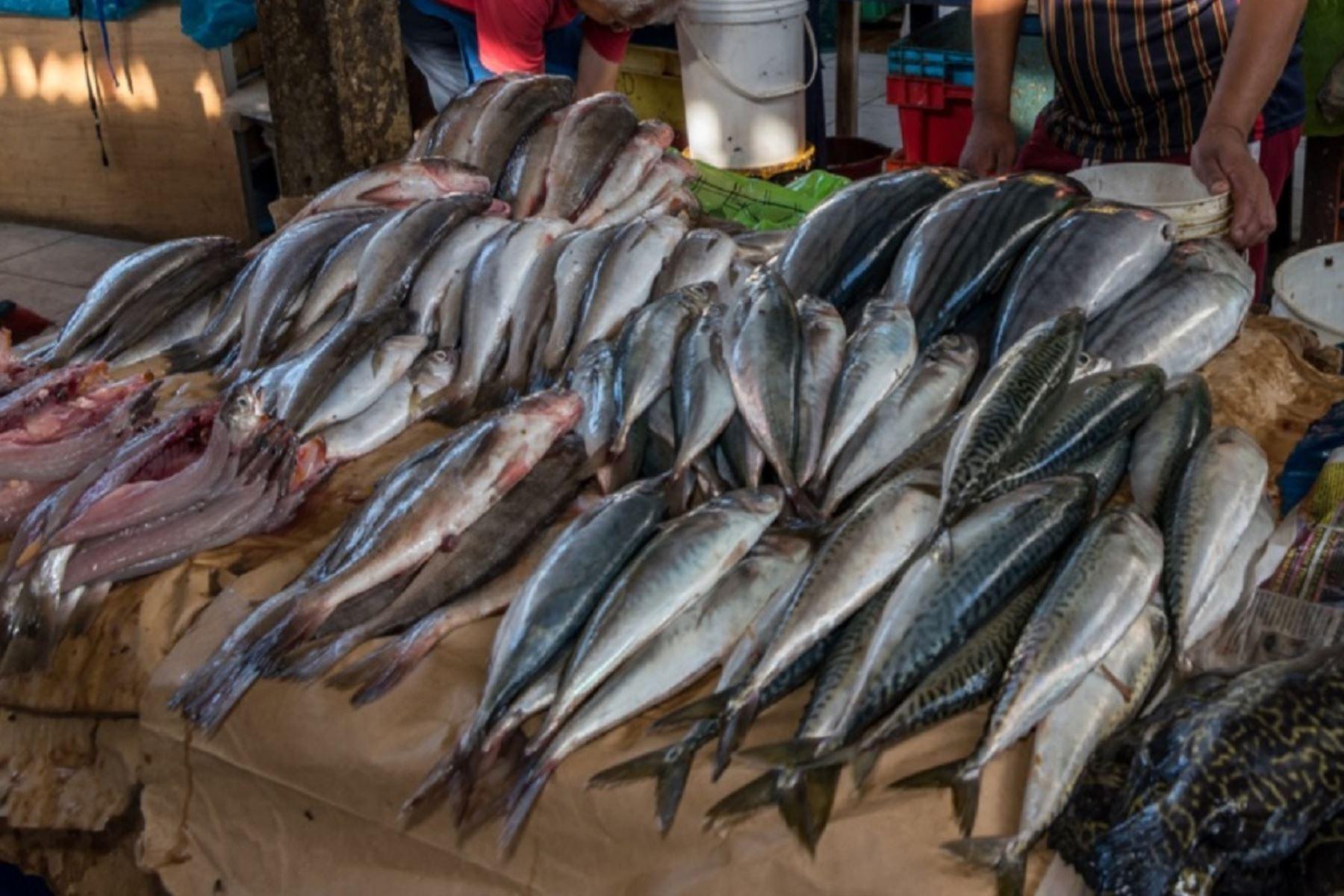 siete-de-cada-10-pescados-son-vendidos-con-otro-nombre-en-la-costa-peruana