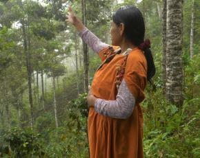 Serfor presentó las experiencias exitosas en gestión de bosques que realizan las comunidades indígenas de cuatro regiones amazónicas. ANDINA/Difusión